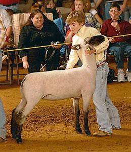 Chabot Show Lambs | Winners